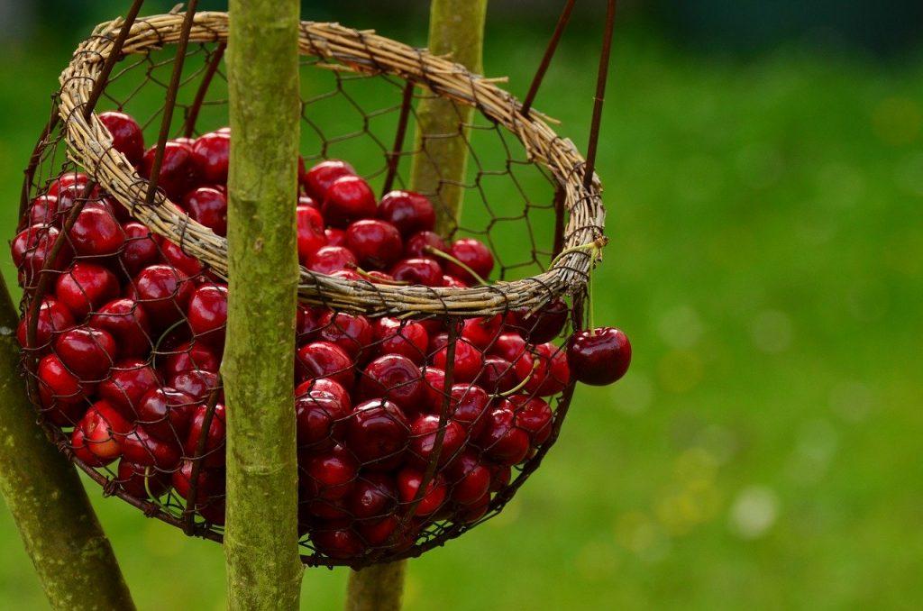 5+1 érv a cseresznyefogyasztás mellett