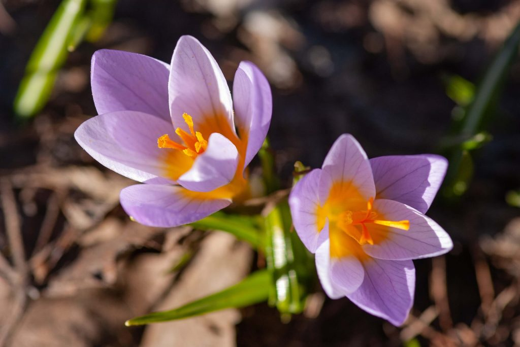 Böjtmás hava – tavaszi népi jóslás és a márciusi hagyományok