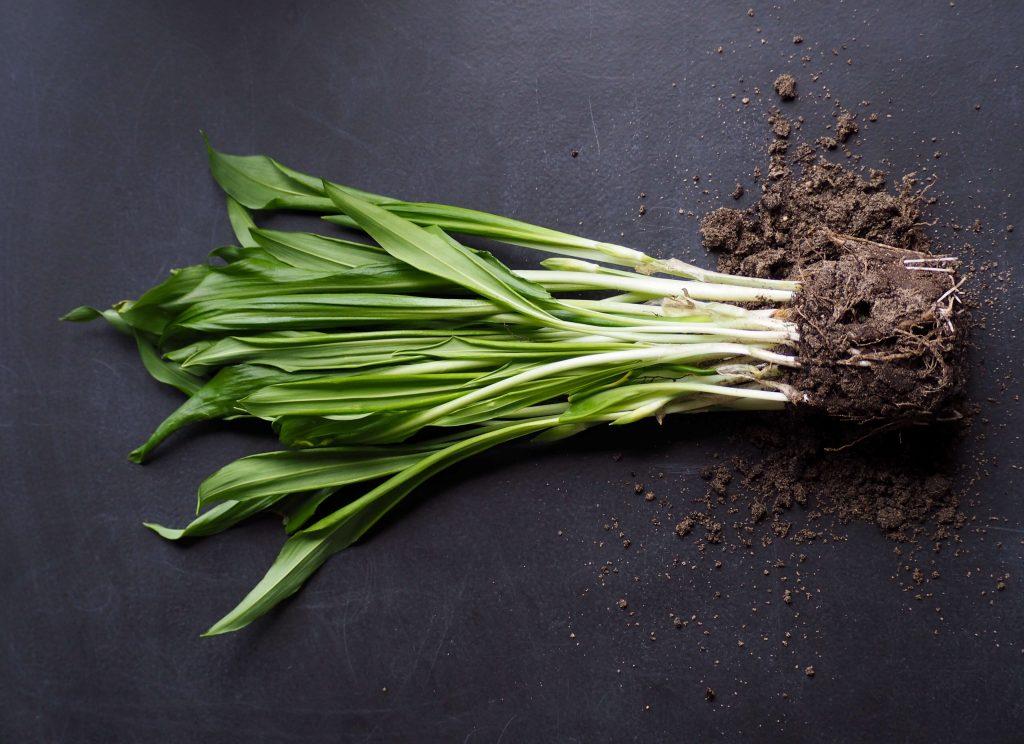Márciusi termények – főszerepben a korai zöldségek!